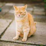 Red Cat Sitting On Concrete Floor Royalty Free Stock Image