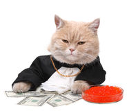 Red cat sitting on the dollar Stock Photo