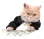 Red cat sitting on the dollar Royalty Free Stock Photo