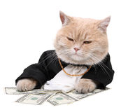 Red cat sitting on the dollar, Christmas, New Year Stock Photo