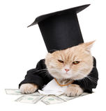 Red cat sitting on the dollar, Christmas, New Year Stock Photos