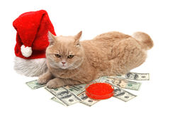 Red cat sitting on the dollar on the white backgro Stock Photography