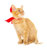 Red cat is sitting on the floor in the red ribbon Royalty Free Stock Images