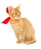 Red cat is sitting on the floor in the red ribbon Royalty Free Stock Photography