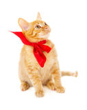 Red cat is sitting on the floor in the red ribbon Stock Photography