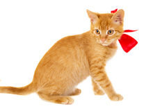 Red cat is sitting on the floor in the red ribbon Stock Photos