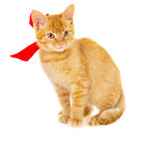 Red cat is sitting on the floor with ribbon Royalty Free Stock Images