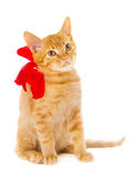 Red cat is sitting on the floor with ribbon Stock Photography