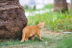 Red cat sitting in grass under a palm tree Royalty Free Stock Photos