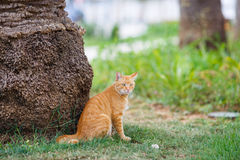 Red cat sitting in grass under a palm tree Stock Photography