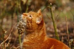 Red cat Stock Photo