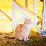 Red cat sitting on green spring grass Stock Photos