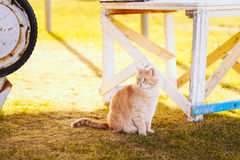 Red cat sitting on green spring grass Stock Photo