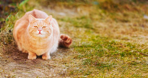 Red cat sitting on green spring grass Stock Image