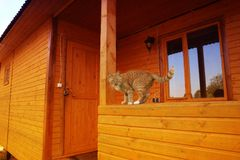 A red cat is sitting on the house. royalty free stock photos