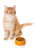 Red cat sitting near the bowl of dry food Royalty Free Stock Photos