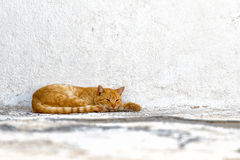 A red cat  sitting outside Royalty Free Stock Image
