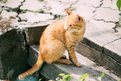 Red Cat Sitting On Steps Outdoor Stock Image