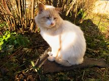 Red cat sitting on a stone, autumn landscape. November royalty free stock images