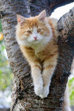 Red cat sitting in a tree. Close up Stock Image