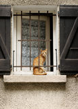 Red cat sitting at the window Stock Photography