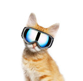 Red cat with ski goggle Stock Photos