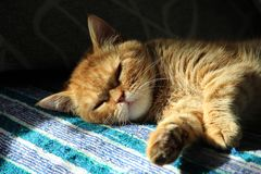 Red cat sleeping on the couch stock photography