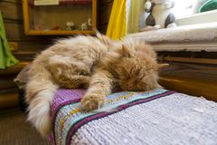 Red cat sleeping inside a house on bench Stock Photo