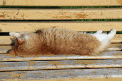 Red cat sleeping on yellow bench. Red cat sleeping on yellow bench Royalty Free Stock Photos