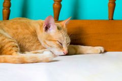 Red cat sleeps on bed. Orange cat resting after lunch. Ginger colored cat in bedroom. Royalty Free Stock Images