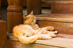 Red cat sleeps on a brown wooden steps Stock Images