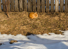 Red cat sleeps near the fence. Basking in the spring sunshine royalty free stock photos