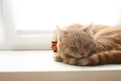The red cat sleeps at a window. In home Royalty Free Stock Photography