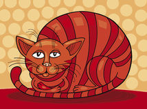 Red Cat Sleepy Royalty Free Stock Images