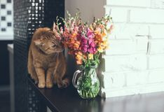 Red cat smelling the flowers Royalty Free Stock Images