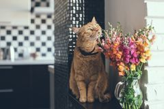 Red cat smelling the flowers Royalty Free Stock Photography