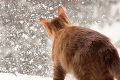 Red Cat and snow Royalty Free Stock Image
