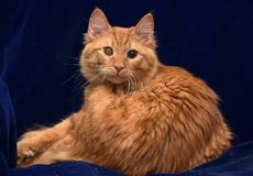 Red cat with a sore eye. A young red cat with a sore eye royalty free stock photos