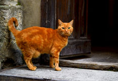Red cat on the street. Stock Image