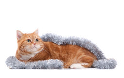 Red cat and tinsel Stock Image