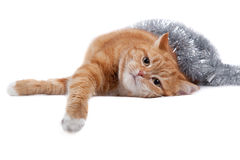 Red cat and tinsel Stock Photography
