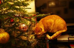 Red cat and tree. Beautiful cat next to the Christmas tree stock photo