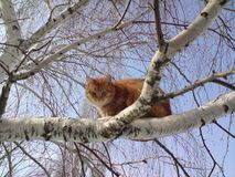 Red cat on a tree. royalty free stock images