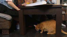 Red cat under the table, eating crumbs, while young friends eating pizza and talking. Professional shot in 4K resolution. 069. You can use it e.g. in your stock photography