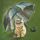 Red cat under the umbrella Royalty Free Stock Photography