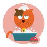 Red cat washing Stock Photo