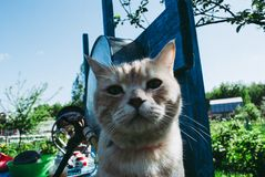Red cat on the washstand. A simple village. Life royalty free stock photos