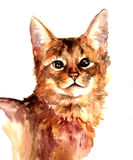 Red cat watercolor. Red cat on a white background watercolor drawing Stock Photo