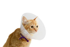 Red cat, wearing a Elizabethan collar on a light background. Red cat, wearing a transparent plastic Elizabethan collar on a light background Royalty Free Stock Photography