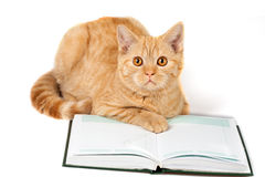 Red cat wearing glasses lying on the book Royalty Free Stock Photo